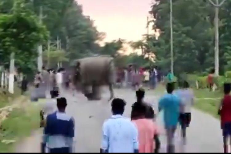Potongan video yang diunggah akun Twitter bernama Parveen Kaswan menunjukkan seekor gajah menyerang dan menginjak seorang manusia hingga tewas di Assam, India.