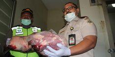 Daging Celeng Ilegal Ditahan Karantina Cilegon