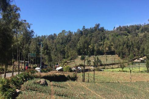 Selama 2 Hari Hutan di Lereng Gunung Semeru Terbakar
