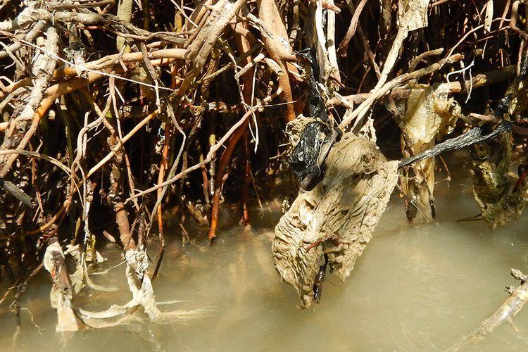 Sampah-sampah plastik terperangkap di antara akar pohon bakau di perairan utara Jawa. Sampah plastik mengancam kawasan hutan mangrove.