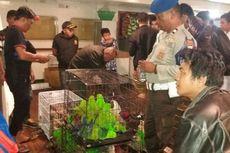 Polisi Tetapkan Tiga Tersangka Penyelundupan 120 Burung Dilindungi