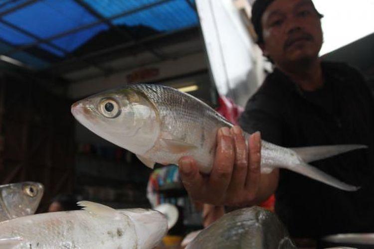 Pedagang menjual ikan bandeng di Pasar Pinangsia, Glodok, Jakarta Barat, Kamis (30/1/2014). Warga Tionghoa mulai membeli ikan bandeng untuk sajian tahun baru Imlek 2565. Menurut kepercayaan Tionghoa, warna putih mengkilap pada ikan bandeng melambangkan keberuntungan dan membawa rezeki untuk disantap saat Imlek. TRIBUNNEWS/HERUDIN