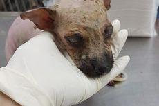 Pelaku Penyiram Air Keras Kesal karena Anjing Milik Iparnya Sering Buang Air Sembarangan