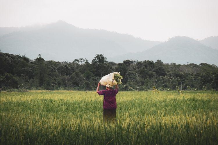 Ilustrasi petani sedang memanen hasil pertaniannya.