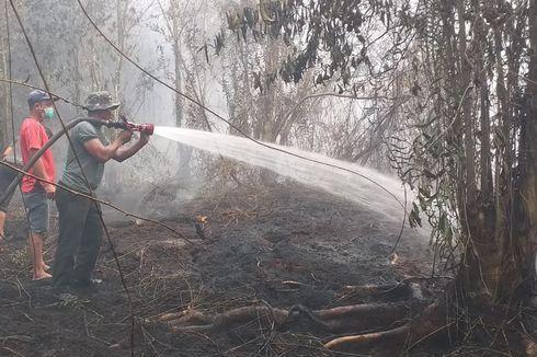 2 Ekor Beruang dan 1 Ular Besar Mati Terbakar Akibat Karhutla di Riau