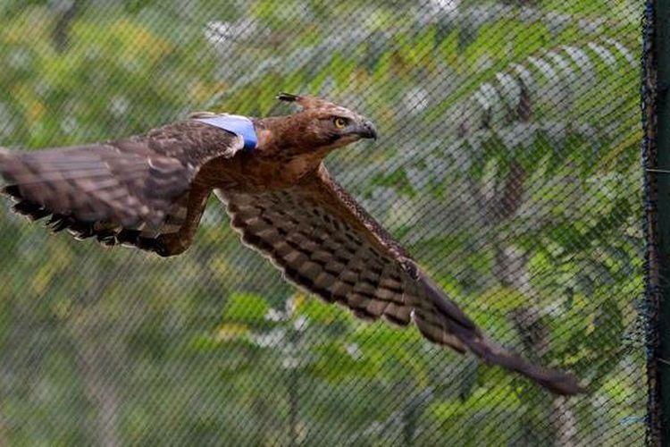 Apakah Burung Garuda Dan Elang Sama Halaman All Kompas Com