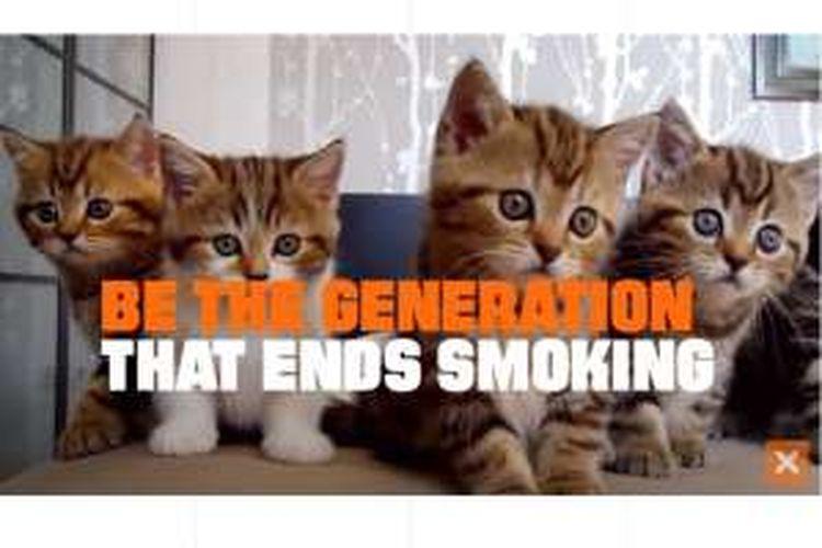 Video kucing lucu untuk kampanye antirokok.