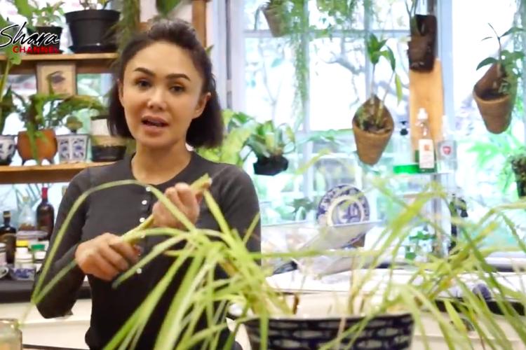 Penyanyi Yuni Shara yang gemar menanam membagikan tips mengusir nyamuk dengan tanaman serai.