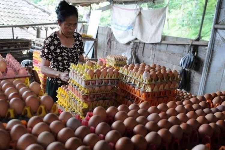 Ilustrasi: Peternak ayam, Rateb, memilah telur yang baru diambilnya dari kandang di Desa Jatiluwih, Kecamatan Penebel, Kabupaten Tabanan, Bali, Jumat (26/4/2013). Sejak seminggu terakhir harga telur tersebut naik dar Rp800 menjadi Rp950 perbutir.