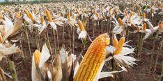 Duta Petani Milenial: Covid-19 Buka Peluang bagi Produk Pertanian Lokal