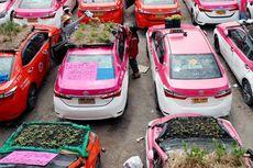 Sulit Cari Penumpang Saat Pandemi, Pengemudi Taksi Ubah Atap Mobil Jadi Ladang Sayur Mayur