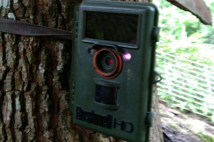 Ilustrasi kamera trap