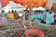 Geliat Tambak Udang Vaname di Bangka, Bertumbuh di Tengah Pandemi