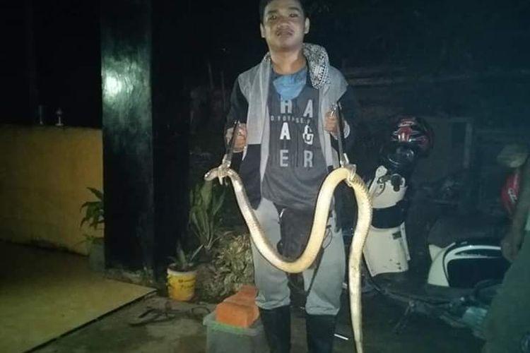 Salah satu tim pemburu Ralu Jambee usai mengamankan ular dari rumah warga