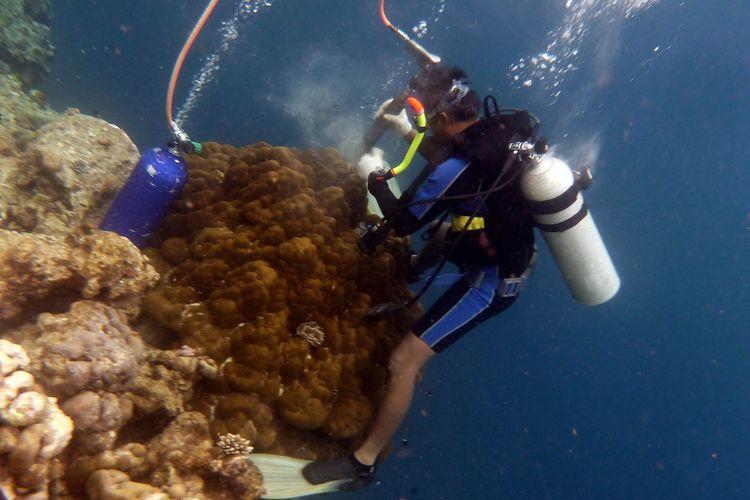 Pengambilan contoh karang untuk studi iklim masa lampau dengan menggunakan pneumatic bor tangan tenaga dari tekanan udara