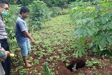 Sedang Menyiangi Rumput, Tiba-tiba Sang Istri Terperosok ke Lubang Diduga Sinkhole
