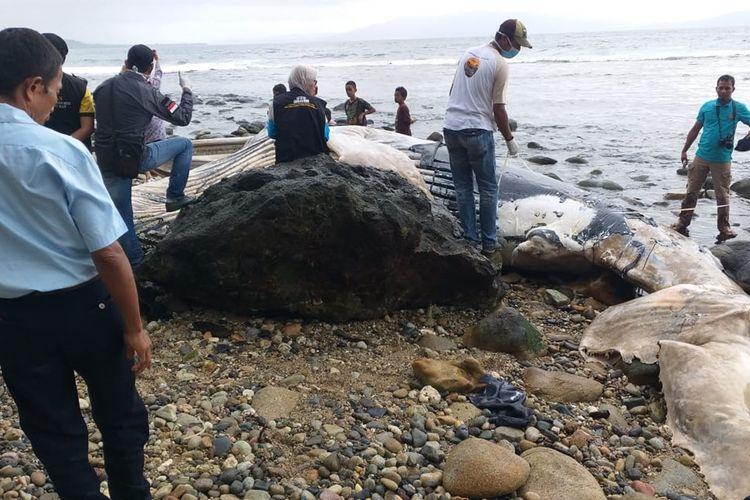 Bangkai paus sepanjang 8 meter terdampar di pantai Desa Liliboy, Kecamatan Leihitu Barat, Kabupaten Maluku Tengah, Jumat (30/8/2019) Foto Dok LPSP
