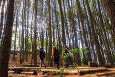 "Hutan Pinus Mangunan, Tempat ""Ngadem"" nan Fotogenik di Jogja"