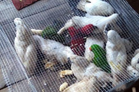 Perdagangan Liar 85 Ekor Burung Langka di Maluku Utara Digagalkan