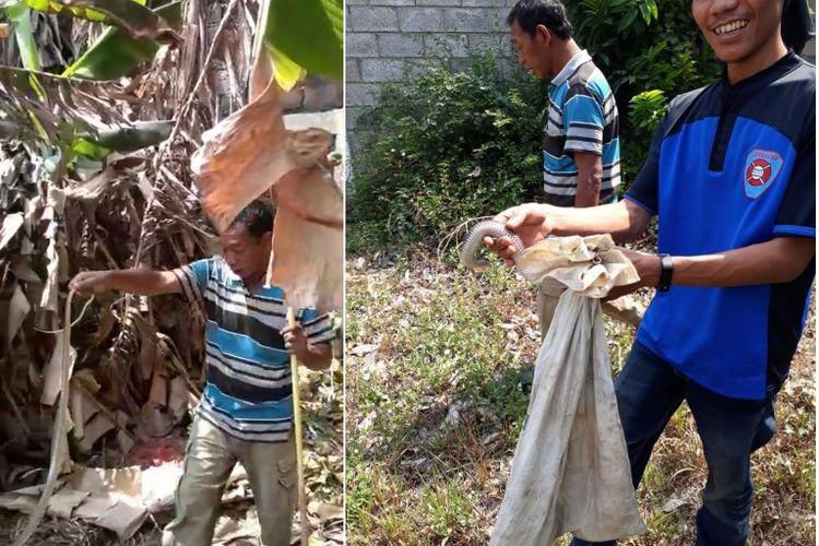 Cuplikan video dan foto penangkapan ular yang diklaim berlokasi di Taman Giri Loka.