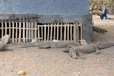 Anggota Komisi IV Minta Pemerintah Dengar Saran Publik soal Jurassic Park Komodo