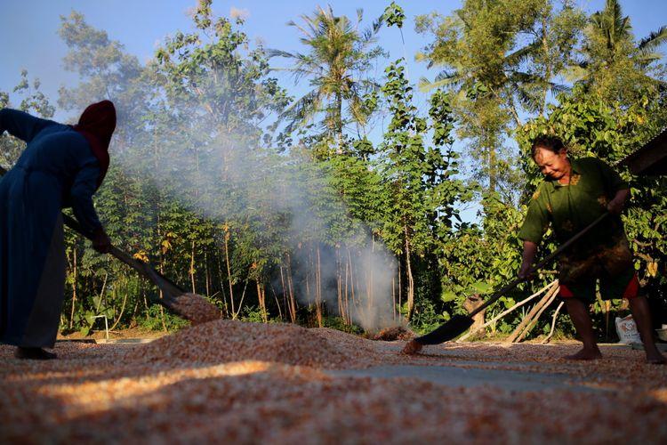 Kati dan Atmo Parigi (kanan) menjemur jagung pipil hasil panen di desa Tegal Yoso, Purbolinggo, Lampung Timur, Jumat (28/7/2017). Atmo Parigi dan istrinya bekerja sebagai petani sekaligus melindungi sawah dan kebunnya dari kawanan gajah liar.