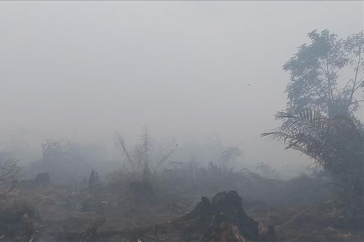 Kebakaran Hutan dan Lahan Terjadi di Rokan Hilir