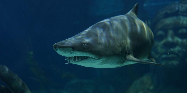 Alasan Ikan Hiu Menyerang Manusia