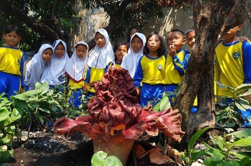 Bunga Bangkai Tumbuh di Sekolah, Murid SDN Kayuringin Jaya II Bekasi Tak Perlu ke Kebun Raya Bogor