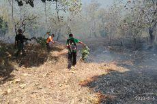 Hutan Baluran Situbondo yang Terbakar Meluas Capai 15 Hektar