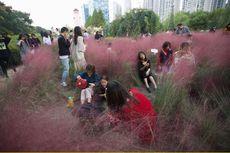 """Seperti di Indonesia, Pemburu """"Selfie"""" China Rusak Area Rumput Pink"""