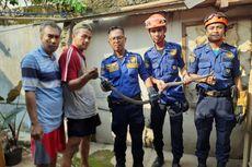 Damkar Depok Temukan 26 Ular Kobra di Bawah Fondasi Rumah Warga