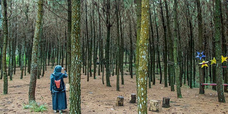 Kawasan hutan pinus di Wisata Wonoasri Seper (WNS), Wonogiri
