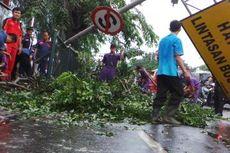 Hujan dan Angin Kencang Dini Hari Tadi, 7 Pohon Tumbang di Bekasi