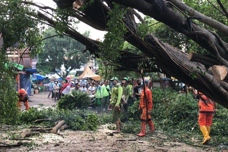 Sejumlah petugas dari Suku Dinas Kehutanan Jakarta Selatan bersama petugas Penanganan dan Sarana Umum (PPSU) Pondok Labu telah menangangi pohon beringin yang rubuh di area parkir motor Pasar Pondok Labu, Cilandak, Jakarta Selatan pada Kamis (12/11/2020) sekitar pukul 17.30 WIB.