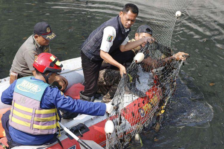 Petugas gabungan melakukan upaya penangkapan buaya di Grogol, Jakarta, Jumat (29/6/2018). Pada Rabu (27/6/2018) pagi, warga setempat melihat beberapa ekor buaya berenang di gorong-gorong Kali Grogol.