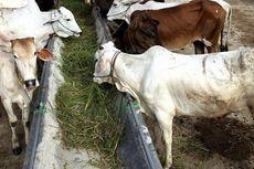 10 Langkah untuk Cegah Resistensi Antimikroba pada Hewan Ternak