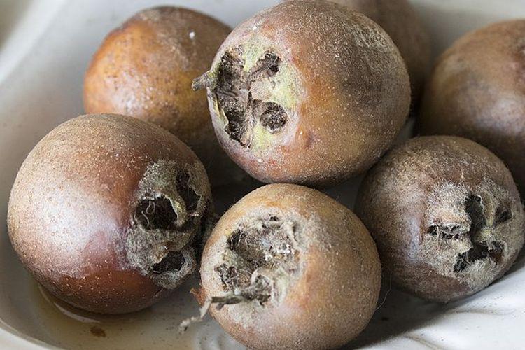 Buah medlar yang populer di abad pertengahan dijuluki buah pantat terbuka. [Zeynel Cebeci Via Wikimedia Commons]