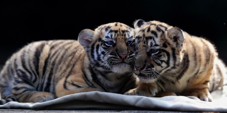 85+ Gambar Kebun Binatang Yang Belum Diwarnai Gratis Terbaik