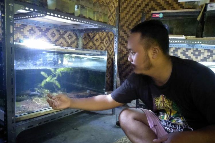 Kismaya Menunjukkan Ikan Predator Miliknya di Rumahnya Selasa (22/12/2020)