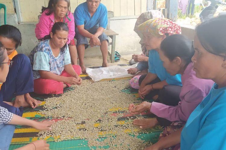 Petani kopi di daerah Tapanuli mendapatkan pelatihan pemilahan kopi