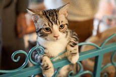 Penyebab Diare pada Kucing dan Cara Mencegahnya