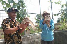 Berkat Burung Hantu, Panen Padi di Desa Pasirmulya Karawang Melimpah