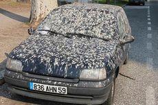 Warna Mobil Apa yang Sering Jadi Sasaran Kotoran Burung?
