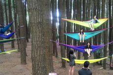 Wisata Yogyakarta, Rumah Nanas Spongebob di Tengah Hutan Pinus