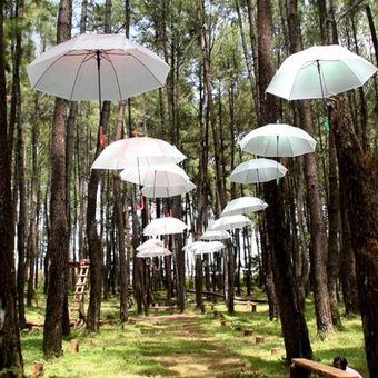 Wisata Hutan Pinus Samparona merupakan salah satu tempat wisata baru yang ada di Kota Baubau, Sulawesi Tenggara dan menjadi salah satu tempat wisata andalan bagi warga sekitar.