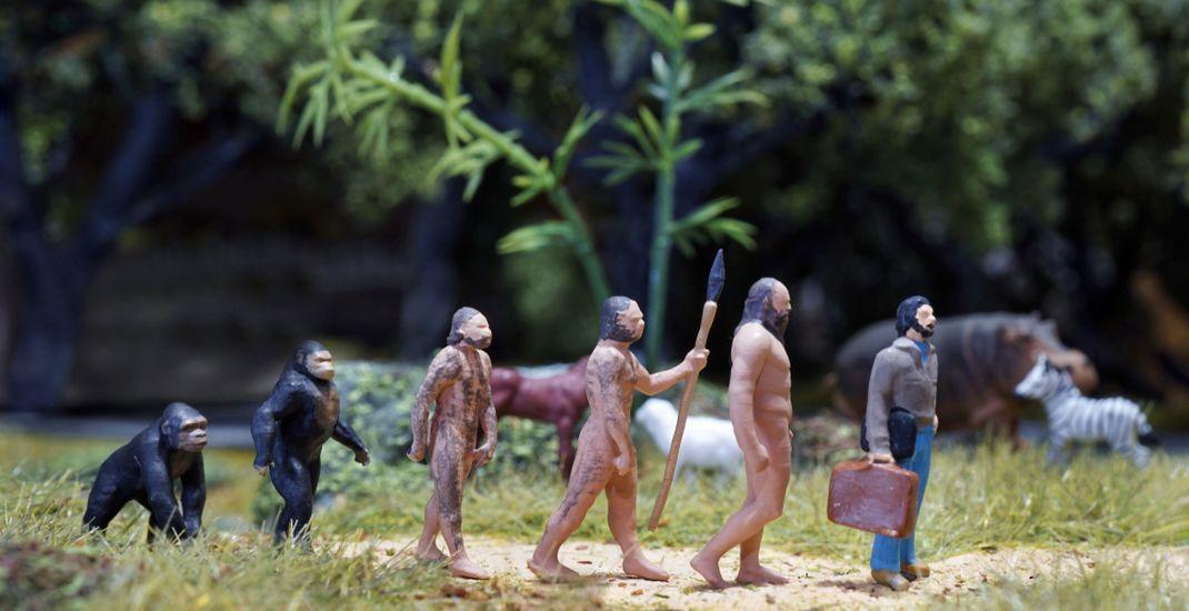 Ilustrasi evolusi