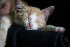 10 Hal yang Bisa Sebabkan Kucing Tidur Lebih Lama Daripada Biasanya