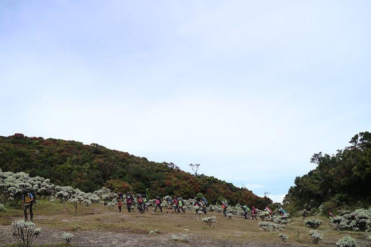 Pendaki gunung di Lembah Mandalawangi Gunung Pangrango, Jawa Barat.