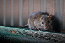 [POPULER PROPERTI] 4 Cara Ampuh Cegah Tikus Bersarang di Dapur